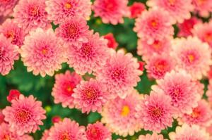 flowers-482575_960_720