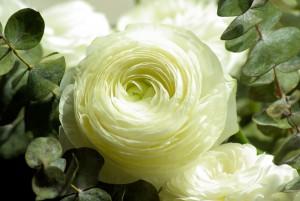 flowers-728811_960_720